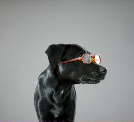 Eyewear「Puppy wearing glasses」:スマホ壁紙(19)