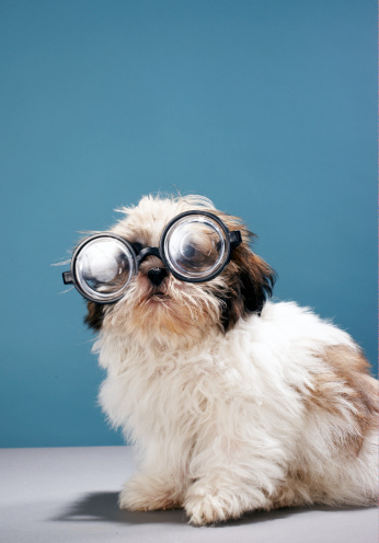 Three Quarter Length「Puppy wearing thick glasses」:スマホ壁紙(16)