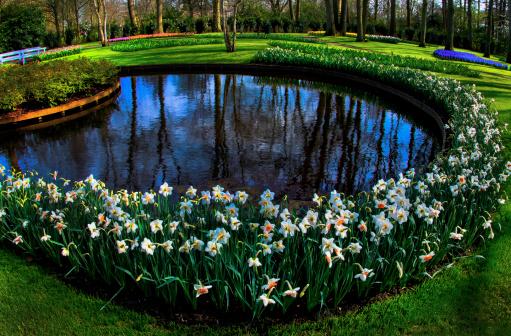 キューケンホフ公園「Daffodils surround pond」:スマホ壁紙(15)