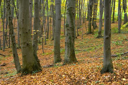 Boreal Forest「Forest.」:スマホ壁紙(11)