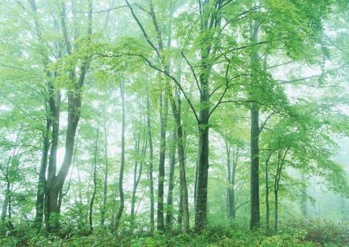 Fog「Forest」:スマホ壁紙(13)