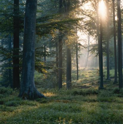 楽園「Forest」:スマホ壁紙(15)
