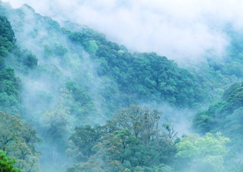 Fog「Forest」:スマホ壁紙(14)