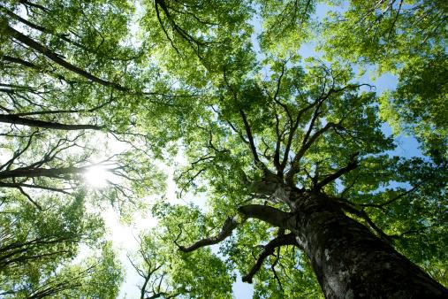 Sunbeam「Forest」:スマホ壁紙(7)
