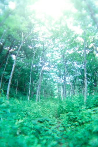 Japan「Forest」:スマホ壁紙(10)