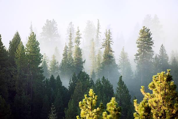 Forest:スマホ壁紙(壁紙.com)