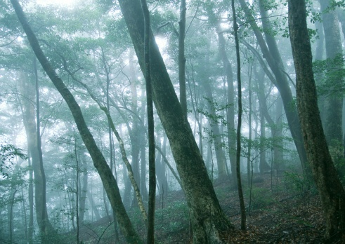 Fog「Forest」:スマホ壁紙(10)