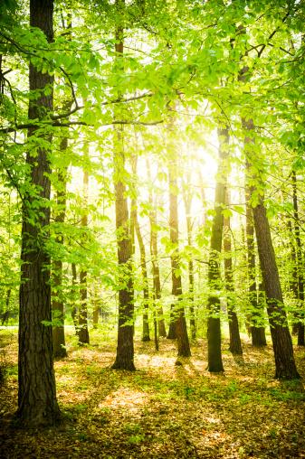 森林「林」:スマホ壁紙(14)