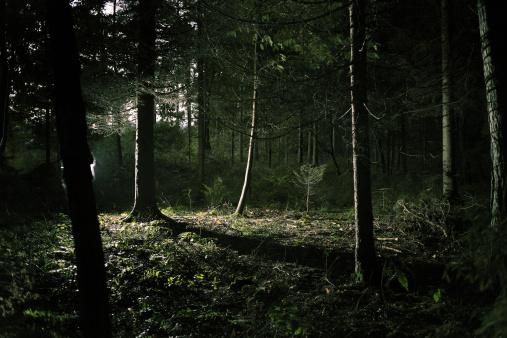 Woodland「Forest」:スマホ壁紙(16)