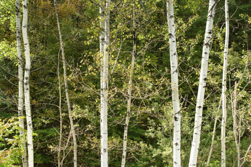 Adirondack Mountains「Forest」:スマホ壁紙(12)