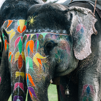 Rajasthan「Two colorful elephant face painted and decorated. Jaipur, Rajasthan, India」:スマホ壁紙(17)
