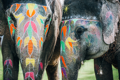 Rajasthan「Two colorful elephant face painted and decorated. Jaipur, Rajasthan, India」:スマホ壁紙(0)