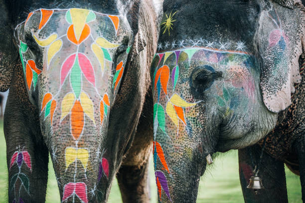 Two colorful elephant face painted and decorated. Jaipur, Rajasthan, India:スマホ壁紙(壁紙.com)