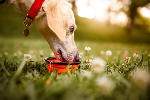 Mixed-Breed Dog「Dog at park drinking water」:スマホ壁紙(12)