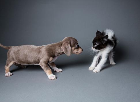 子猫「愛らしい子犬子猫をギョッとさせる」:スマホ壁紙(18)