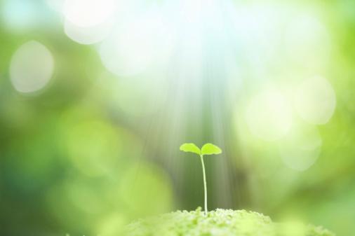 Sunbeam「Seedling growing」:スマホ壁紙(11)