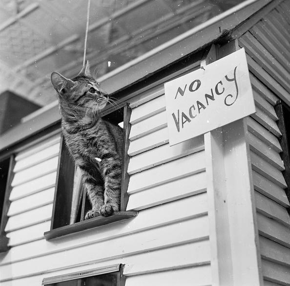 Kitten「Cat Hostel」:写真・画像(8)[壁紙.com]