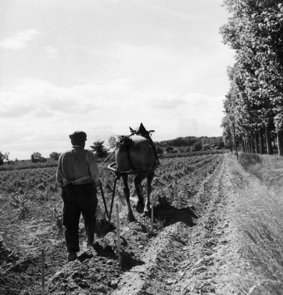 Working Animal「Viniculture」:写真・画像(13)[壁紙.com]