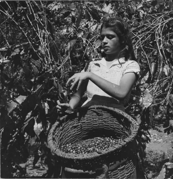 Costa Rica「Harvesting Coffee」:写真・画像(18)[壁紙.com]