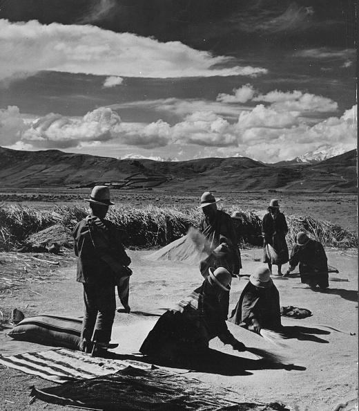 Grass Family「Bolivians Winnow」:写真・画像(3)[壁紙.com]