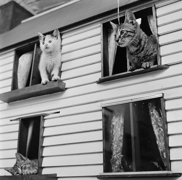 Kitten「Kitten House」:写真・画像(8)[壁紙.com]