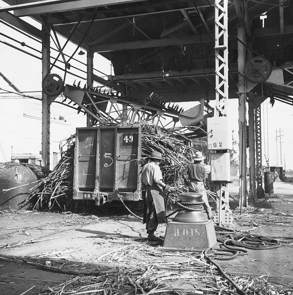 Raw Food「Sugar Processing」:写真・画像(8)[壁紙.com]