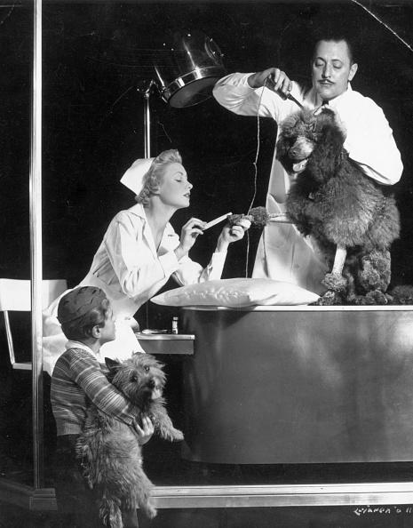 Spencer Arnold Collection「Poodle Parlour」:写真・画像(2)[壁紙.com]