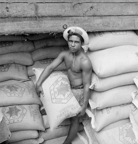 Sugar Cane「Stevedore」:写真・画像(13)[壁紙.com]
