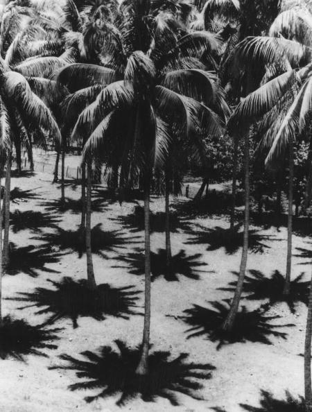 影「Palm Shadows」:写真・画像(12)[壁紙.com]