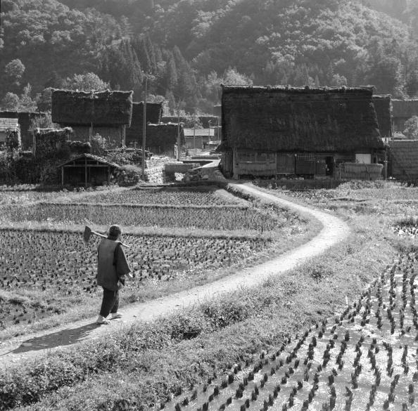Non-Urban Scene「Rice Field Walk」:写真・画像(5)[壁紙.com]