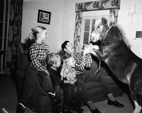 Horse「Pet Pony」:写真・画像(12)[壁紙.com]