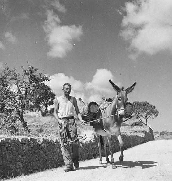 Olive Oil「Oil Donkey」:写真・画像(5)[壁紙.com]
