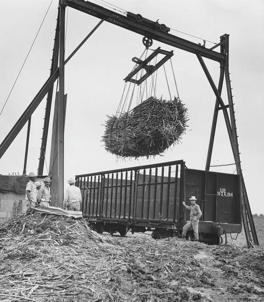 Sugar Cane「Hoisting Sugar Cane」:写真・画像(0)[壁紙.com]