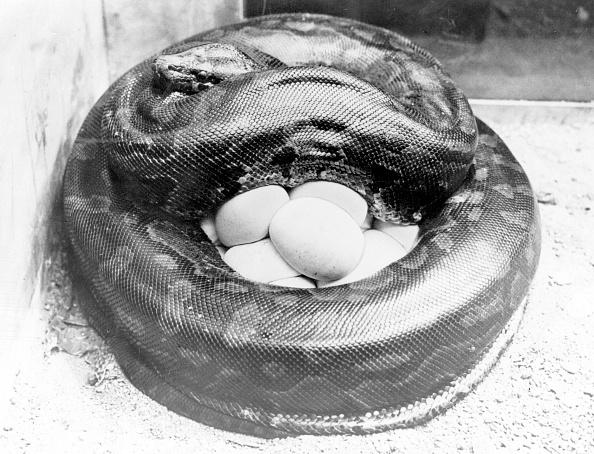 Protection「Mother Python」:写真・画像(8)[壁紙.com]