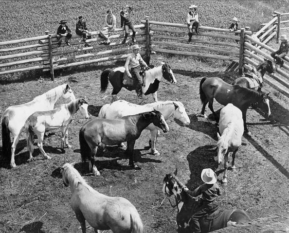 Working Animal「Horse Ranch」:写真・画像(5)[壁紙.com]