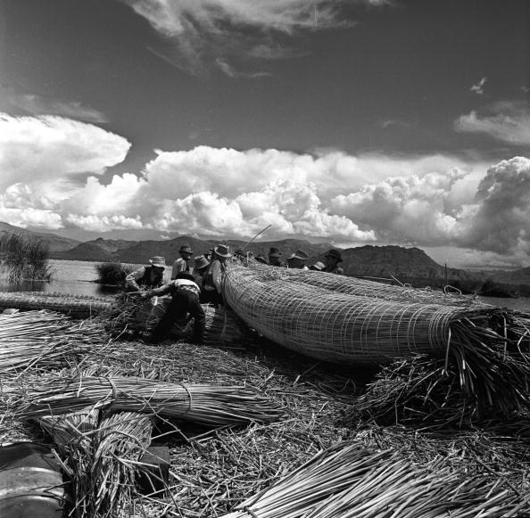 Grass Family「Titicaca Totras」:写真・画像(17)[壁紙.com]