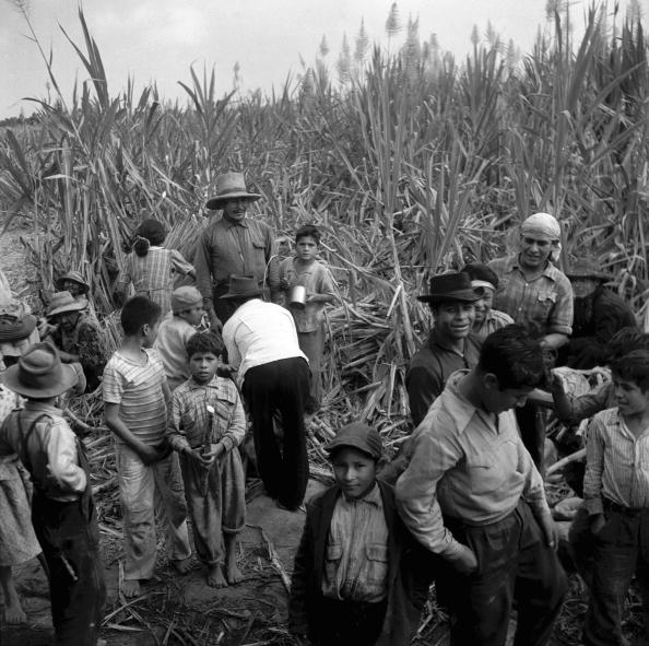 Sugar Cane「Sugar Harvest」:写真・画像(19)[壁紙.com]