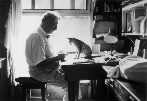 動物「Albert Schweitzer」:写真・画像(9)[壁紙.com]