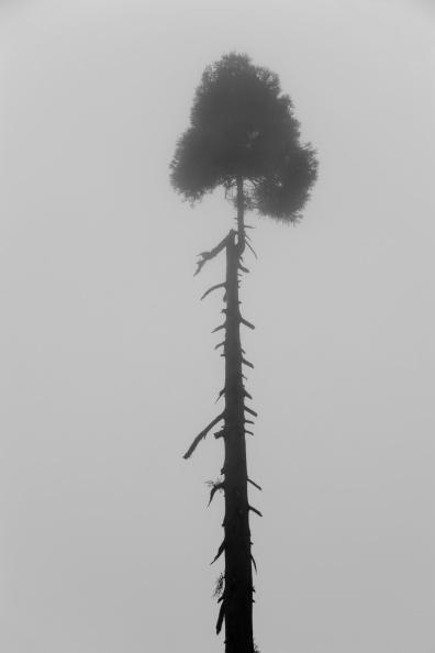 絵「Tree In The Mist」:写真・画像(17)[壁紙.com]
