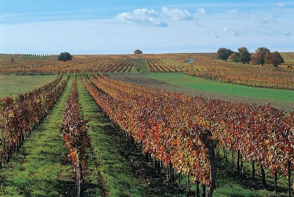 Winemaking「Horitschon」:写真・画像(11)[壁紙.com]