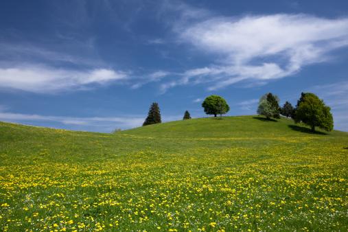 花畑「バイエルン春の草地」:スマホ壁紙(15)