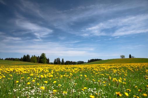 花畑「バイエルン春の草地」:スマホ壁紙(4)