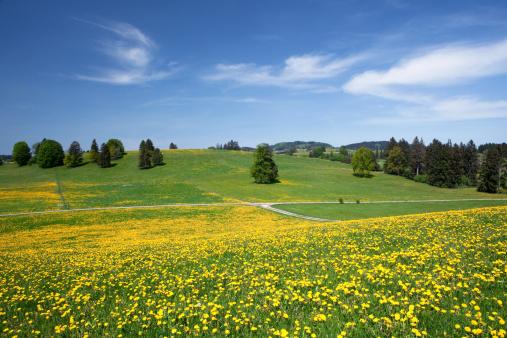 花畑「バイエルン春の草地」:スマホ壁紙(12)