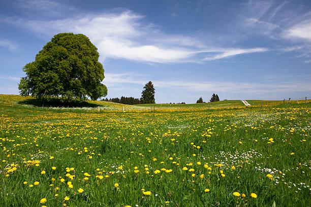 バイエルン春の草地:スマホ壁紙(壁紙.com)