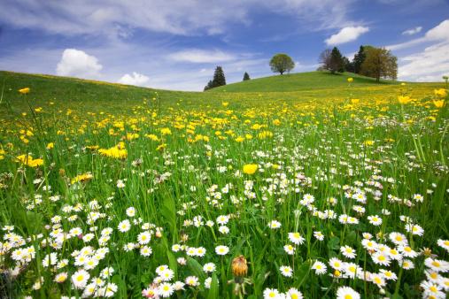 たんぽぽ「バイエルン春の草地」:スマホ壁紙(15)