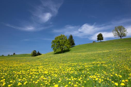 花畑「バイエルン春の草地」:スマホ壁紙(0)
