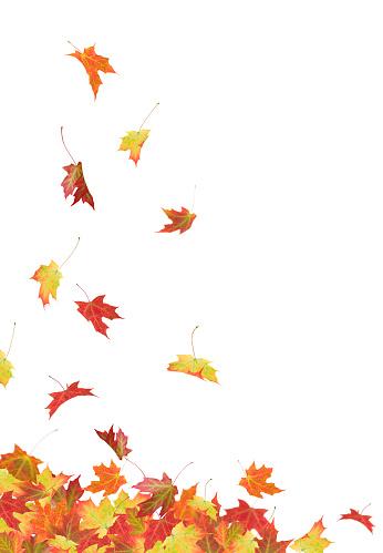 紅葉「秋のカエデの葉」:スマホ壁紙(4)