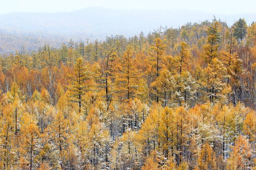 Heilongjiang Province「Greater Khingan Range autumn,Heilongjiang Province,China」:スマホ壁紙(15)