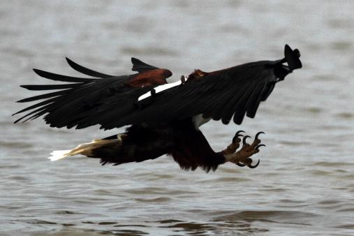 Lake Bogoria National Park「African Fish Eagle」:スマホ壁紙(7)