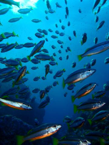 魚・熱帯魚「魚のバースト」:スマホ壁紙(15)
